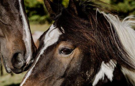 Urlaub mit Pferd im Gutshaus Ehmkendorf in Mecklenburg Vorpommern