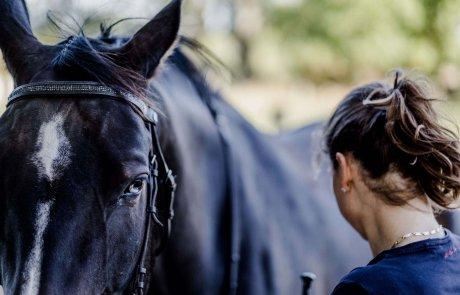 Nadin Fischer und Pferd Lero bei der Bodenarbeit