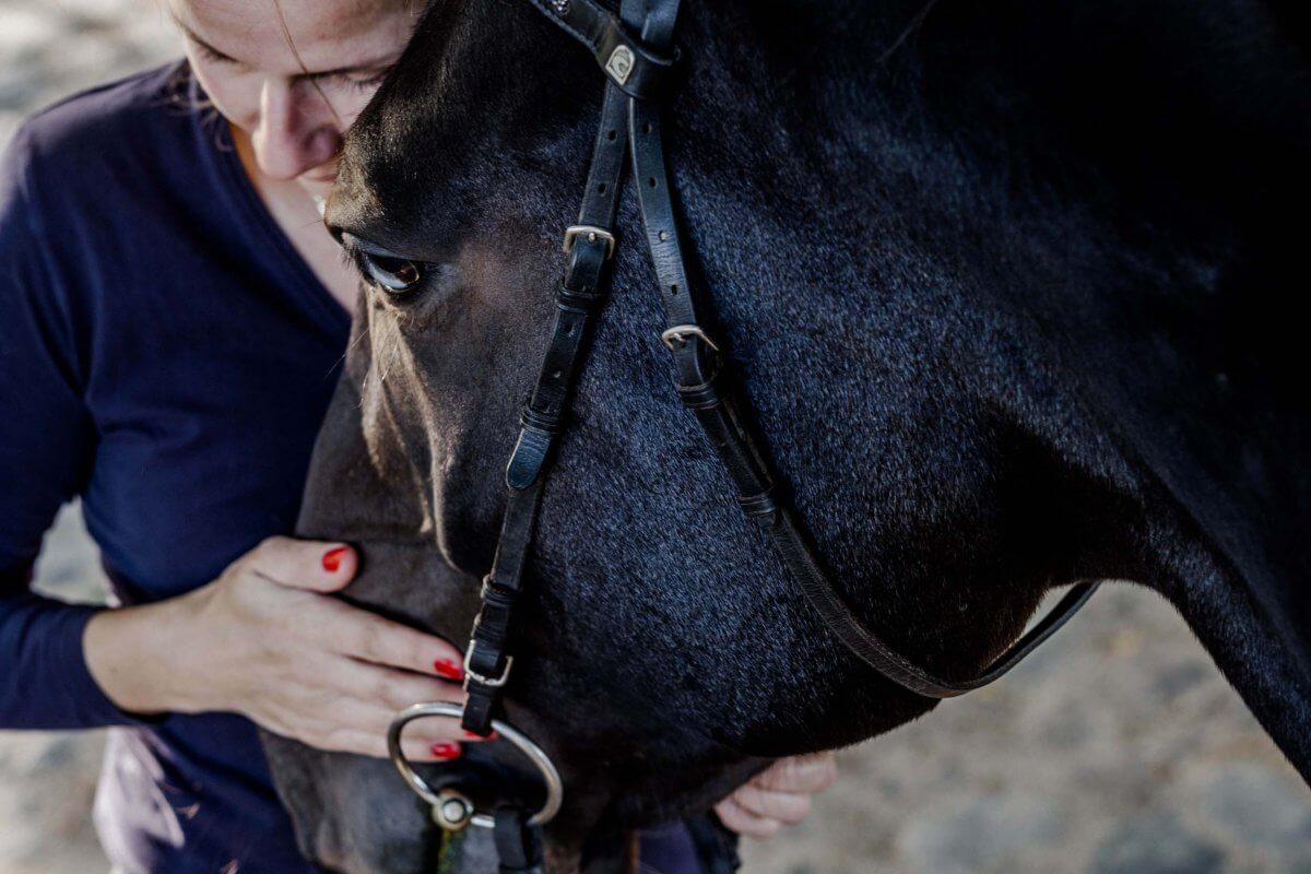 Pferde Osteopathie Seminar im Gutshaus Ehmkendorf