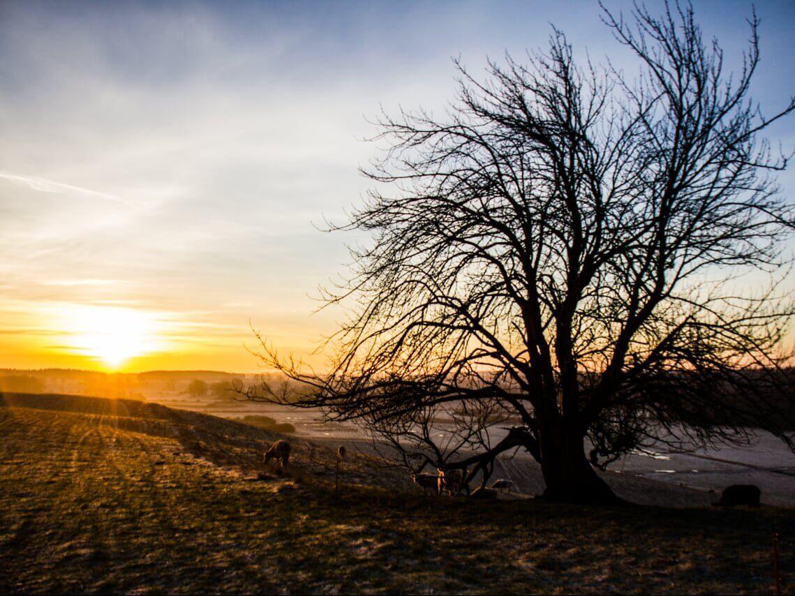 Sonnenuntergang Landschaft - Mecklenburg