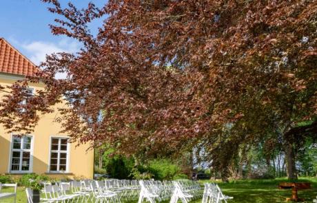 Hochzeit im Gutshaus Ehmkendorf - Trauung - Blutbuche